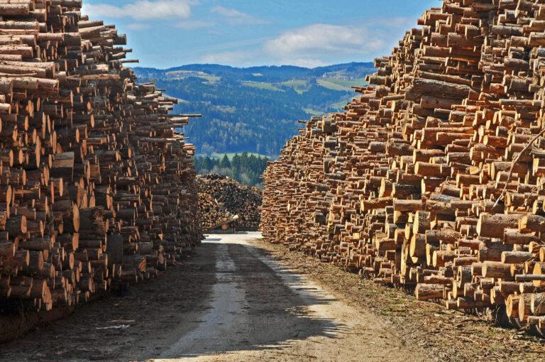 Schadholzbewältigung