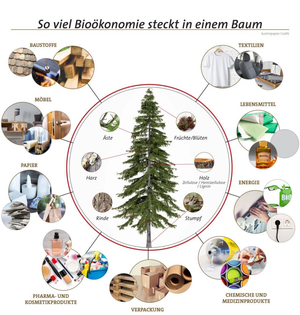 soviel bioökonomie steckt in einem baum